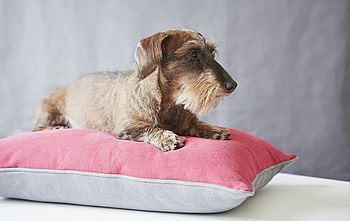 Linen Union Dog Bed