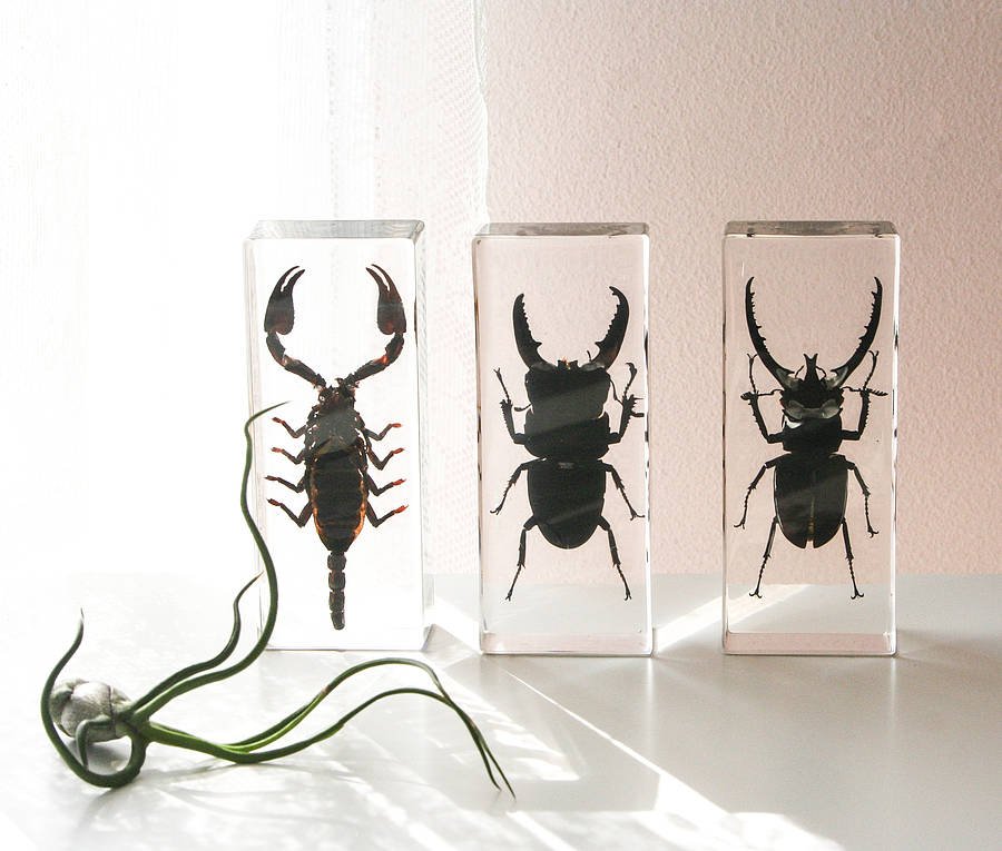Plastic Insects In Resin