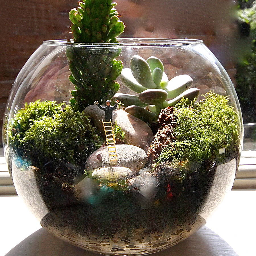 mini world terrarium kit window cleaner by london garden trading. Black Bedroom Furniture Sets. Home Design Ideas