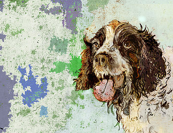 Signed Springer Spaniel Portrait