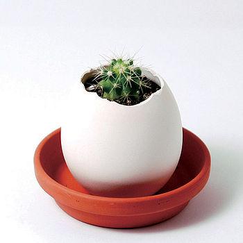 Grow A Cactus In An Egg