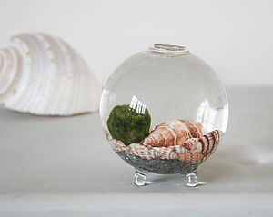 Handblown Glass Vase Mini Terrarium - flowers & plants