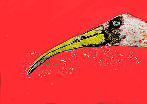 Extra Large Nosy Stork Picture - pictures & prints for children