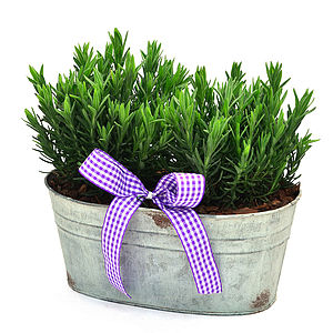 Plant Gift Scented Lavender Trough - outdoor decorations