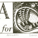 A Is For Armadillo Alphabet Silkscreen Print