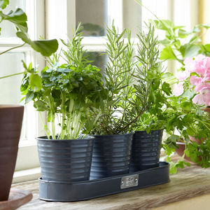 Set Of Three Herb Pots - kitchen