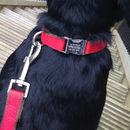 Personalised Dog Collar