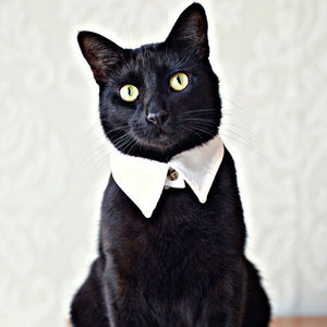 Handmade Cat Shirt Collar - clothes & accessories