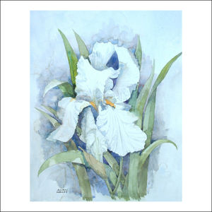 White Iris Original Watercolour Painting - paintings & canvases
