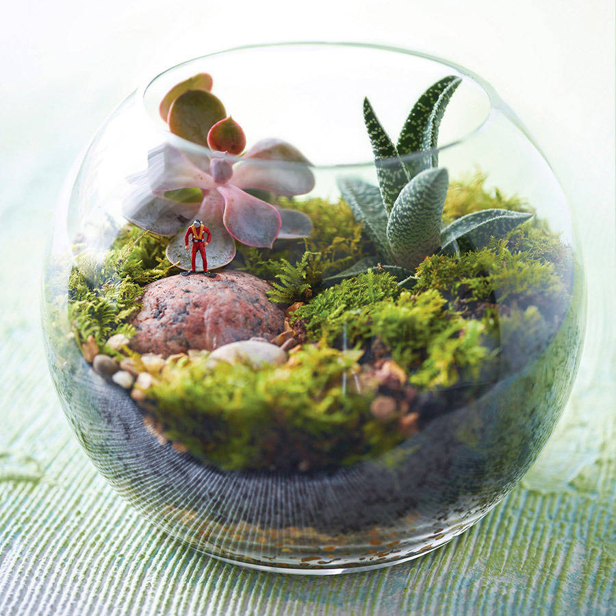 mini world policeman terrarium kit by london garden trading. Black Bedroom Furniture Sets. Home Design Ideas