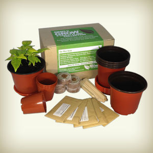 Five Hot Chilli Seed Collection - gardening