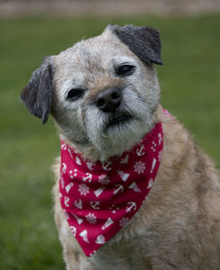 Neckerchief For Dogs - clothing & accessories