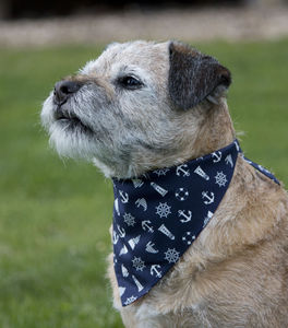 Dog Neckerchief - dogs