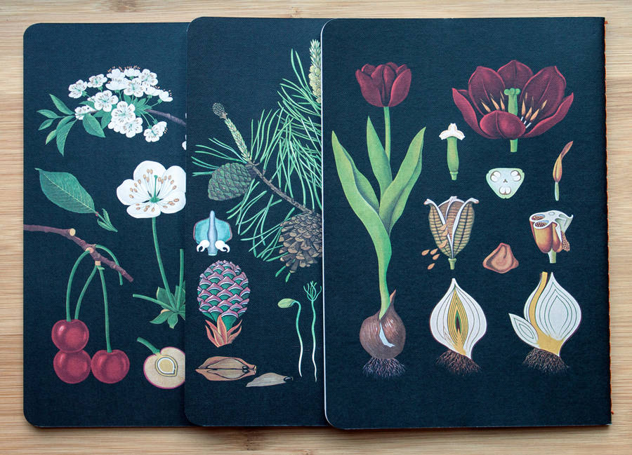 Botanical Notebook Collection By Fox And Star Notonthehighstreet