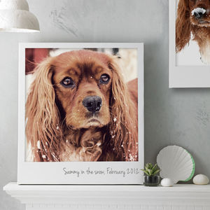 Personalised Pet Polaroid Canvas - gifts from pets