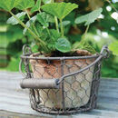 Aged Terracotta Plant Pot In Wire Basket