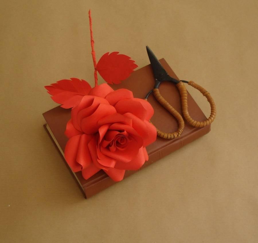 Ruby Wedding Anniversary Rose