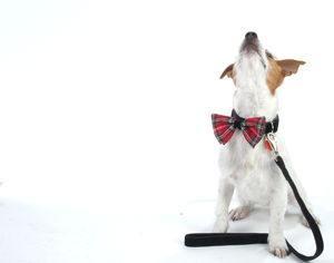 Hamish Tartan Bow Tie Dog Collar And Lead By Scrufts - dog collars