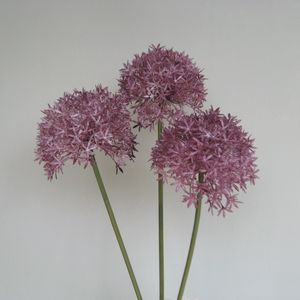 Three Artificial Allium Stems - home accessories