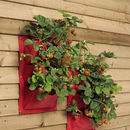 Strawberry Red Colour Planters