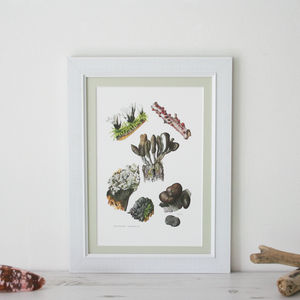 Framed Vintage Print 'Xylariaceae' - contemporary art