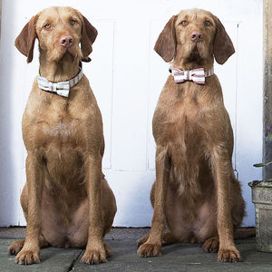 Ticking Stripe Dog Bow Ties - clothing & accessories
