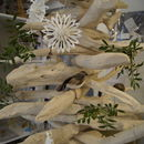 Close Up of Bleached Driftwood Tree