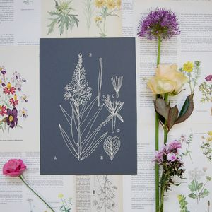 Botanical Diagram Print