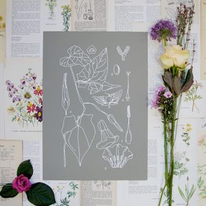 Botanical Studies Diagram Print