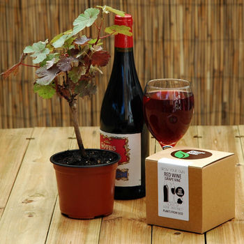 Grow Your Own Red Wine Grape Vine