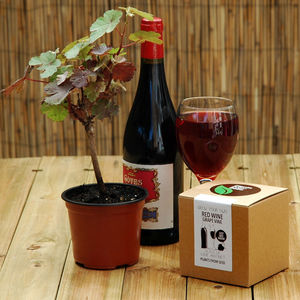 Grow Your Own Red Wine Grape Vine - drink kits