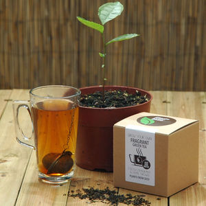 Grow Your Own Tea Plant - tea & infusions