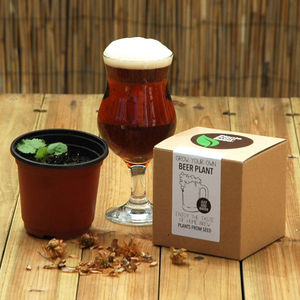 Grow Your Own Beer Plant Kit - garden refresh