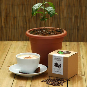 Grow Your Own Coffee Plant Kit - get garden ready