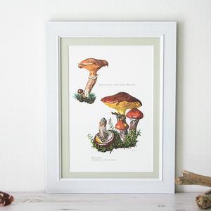 Framed Vintage Mushroom Print 'Suillus Luteus'