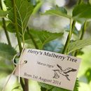 Personalised Baby's First Tree Gift