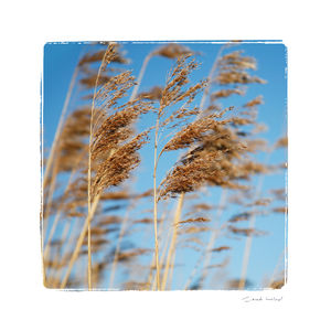 Druiridge Bay Grass - nature & landscape