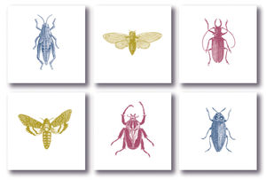 Set Of Six Note Cards; Bugs