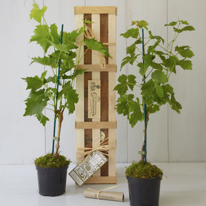 His And Her Grapevine Gift Set - edible plants & seeds