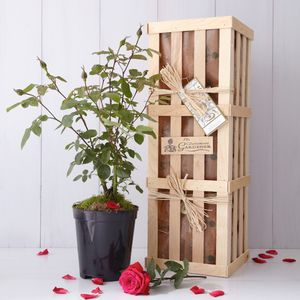Ruby Wedding Anniversary Rose Gift - personalised