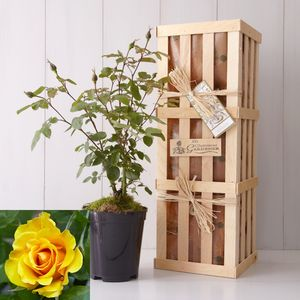 Golden Wedding Anniversary Gift - gardening
