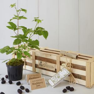 Grow Your Own Blackberry Jam Gift Set - gardening