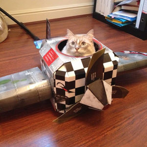 Plane Cat Playhouse - cats