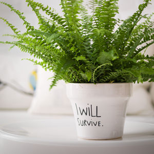 Lyrical Plant Pot - for friends