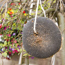 Sunflower Head Bird Seed Feeder