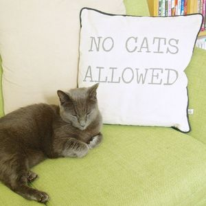 'No Cats Allowed' Cushion - cushions