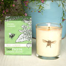 Lime Blossom Scented Votive Candle