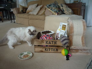 Pesonalised Crate For Cats Or Dogs