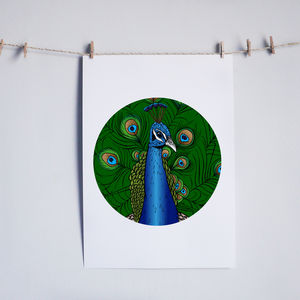 Peacock Illustrated Print