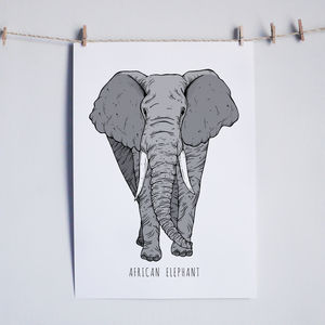 African Elephant Illustrated Print